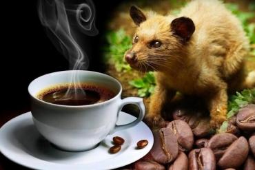 Cách thưởng thức cà phê chồn nguyên chất