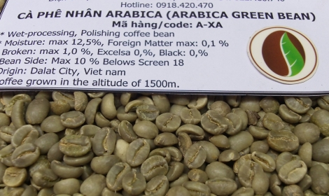 Arabica green bean