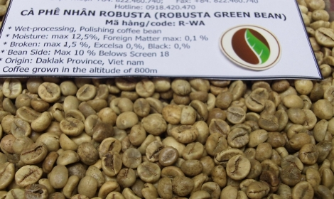 Robusta green bean